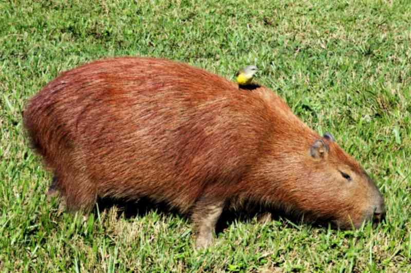 Proposta de deputado federal aumenta em até quatro vezes pena para crime de maus-tratos contra animais