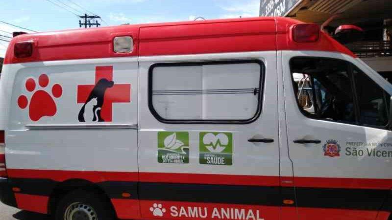 Lei que cria Samu para animais no DF é inconstitucional, decide Justiça