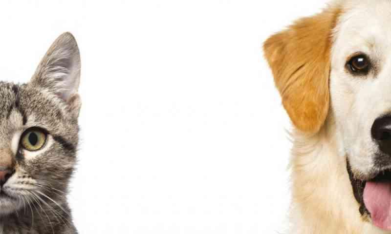 Programa oferece castração gratuita de 1,8 mil cães e gatos por mês no DF