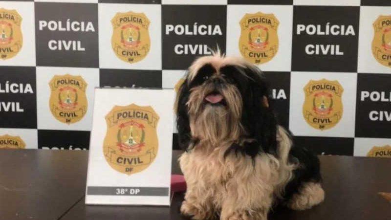 Vídeo: Polícia Civil do DF resgata cadelinha que sofria maus-tratos