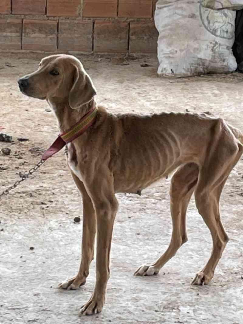 Mulher é presa por maltratar cão no bairro Elpídio Volpini, em Cachoeiro de Itapemirim, ES