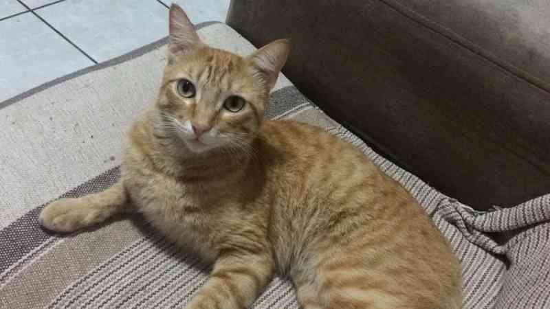 Homem que matou gato com pedrada é preso no ES