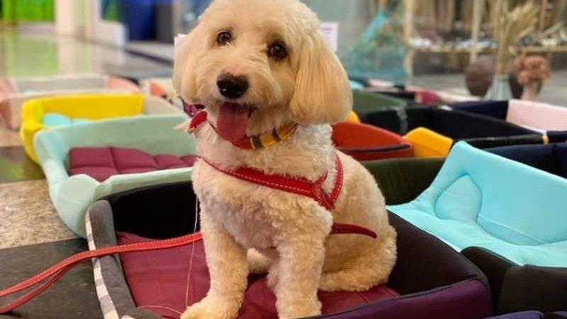 O cachorro Hope é um dos cães que vai aproveitar as caminhas feitas pelos detentos de Xuri — Foto: Divulgação/ONG Pra Mia