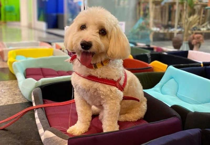 Camas para cães confeccionadas por detentos são doadas para ONG do ES