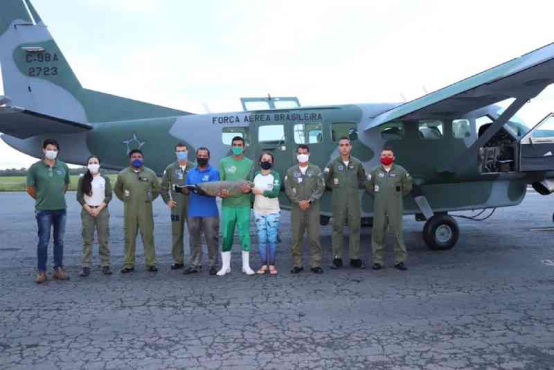FAB realiza transporte aéreo de peixe-boi do Maranhão para o Rio Grande do Norte