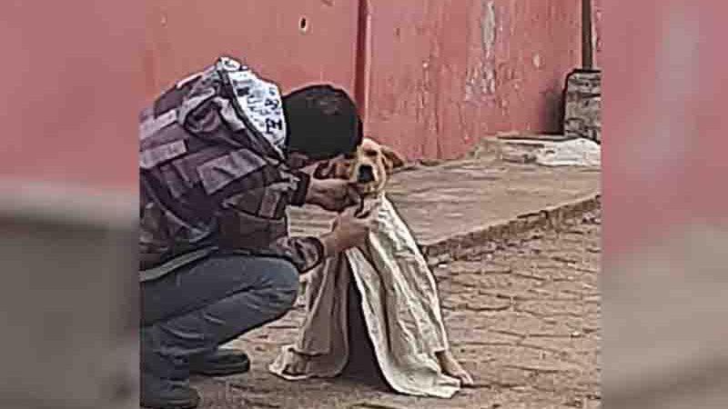 Ana Maria registrou quando homem vestiu roupa em animal, pois achou atitude 'belíssima' — Foto: Arquivo pessoal/Ana Maria de Carvalho Leite