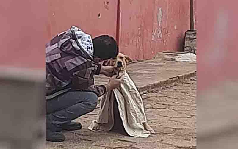 Mulher registra cachorro de rua sendo agasalhado por causa do frio, em Alexânia, GO: 'Ato de carinho'