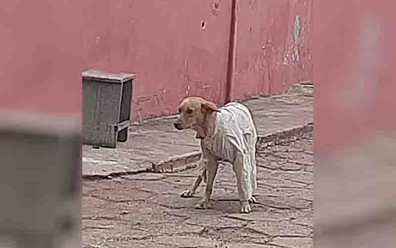 Mulher registra cachorro de rua sendo agasalhado durante frio, em Alexânia. Foto: Arquivo pessoal/Ana Maria de Carvalho Leite