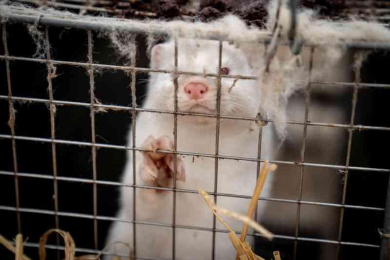 Israel se torna primeiro país do mundo a proibir comércio de peles de animais