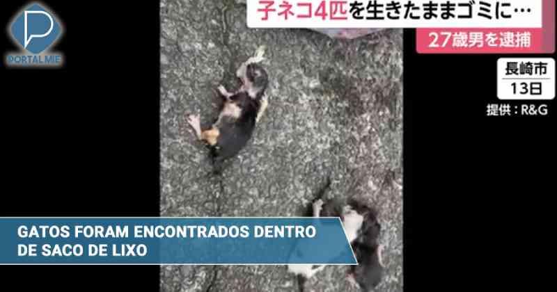 Homem é preso por jogar filhotes de gatos no lixo