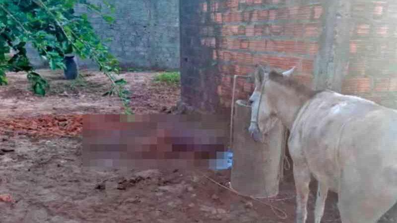 Homem tenta estuprar mula, leva coice e morre no Maranhão