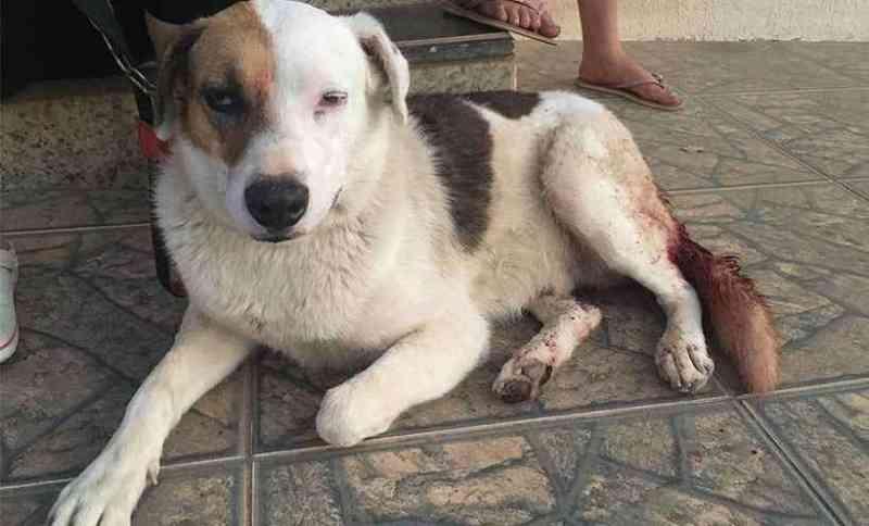 Irritado com latidos, homem tenta arrancar testículos de cachorro, em MG