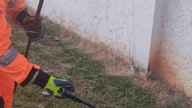 Cobra é resgatada com ferimentos no bairro Ibituruna, em Montes Claros, MG