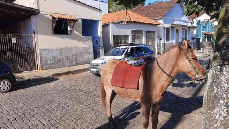 Jovem é detido por maus-tratos contra uma mula em Rio Novo, MG