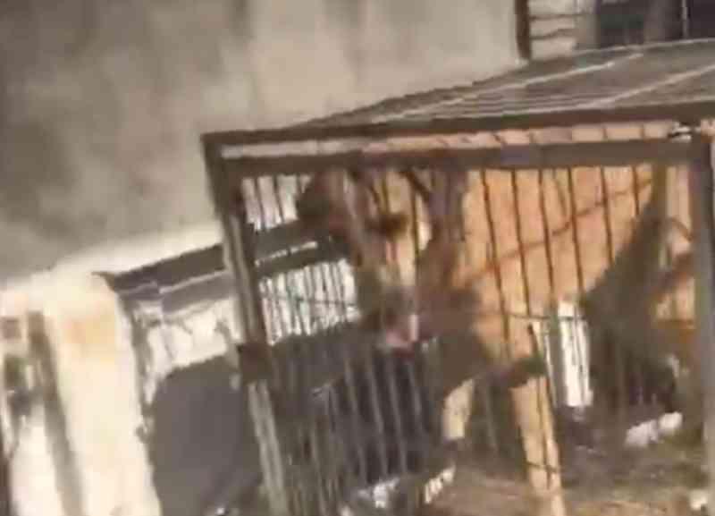 Grupo pressiona, e prefeitura suspende matança de cães em Sete Lagoas, MG