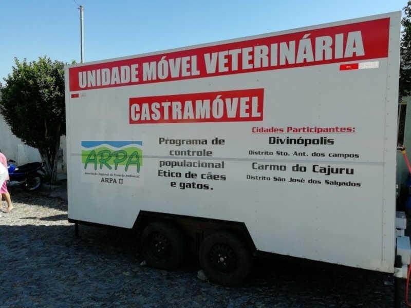 Cães e gatos são castrados gratuitamente até o dia 25 de junho em Divinópolis, MG