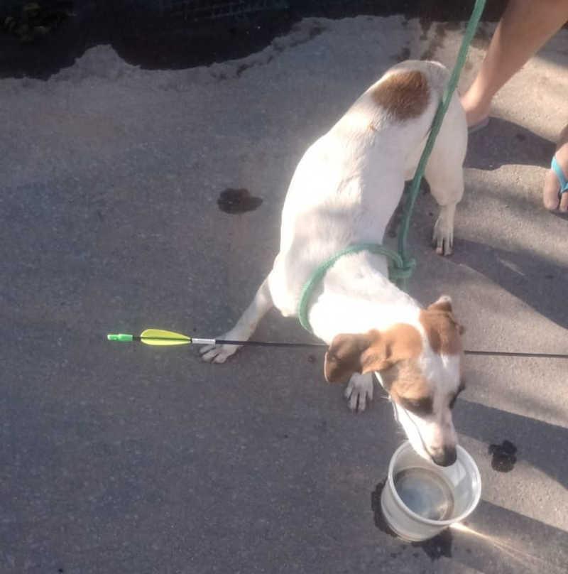 Cachorro tem pescoço transpassado por flecha em Ibirité, na Grande BH: 'Milagre'