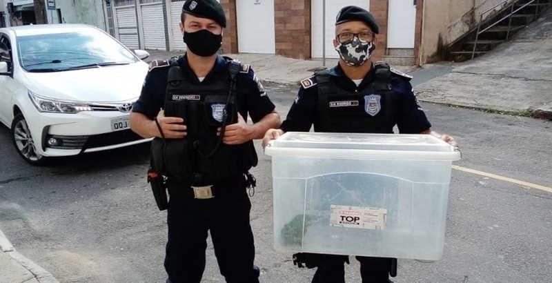 Guarda Municipal captura maritaca em Juiz de Fora — Foto: Guarda Municipal/Divulgação