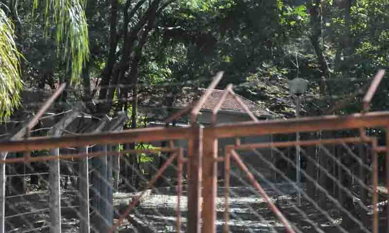 ONG denuncia maus-tratos a cães usados em experimentos na UFMG