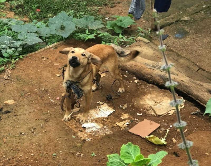 Polícia Civil resgata cães em situação de maus-tratos em Santos Dumont, MG