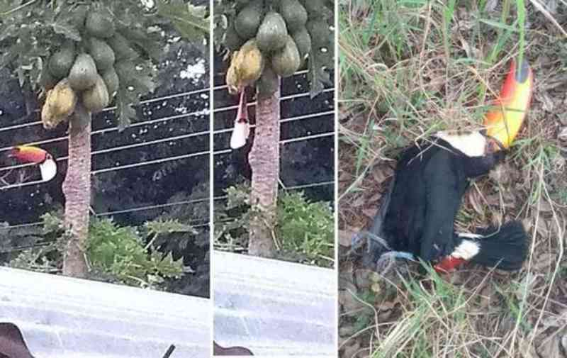 Homem atira e mata três tucanos e gera revolta em Água Clara, MS