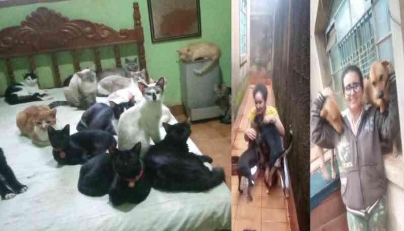 Com 60 animais resgatados, mãe e filha mantém Vakinha para evitar corte elétrico