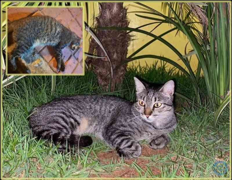 Cães e gatos são envenenados em Coxim, MS
