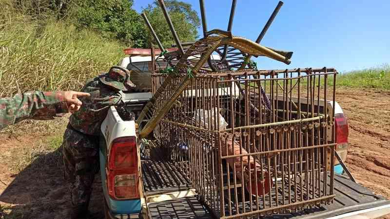 Polícia e produtores se unem contra 'caçadores de javali' e quatro são presos em MS; armas e armadilhas são apreendidas