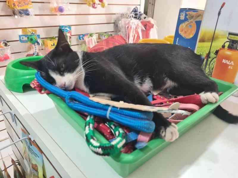Suspeito entra em pet shop e tenta quebrar patas de gato e arremessar animal contra parede em MS