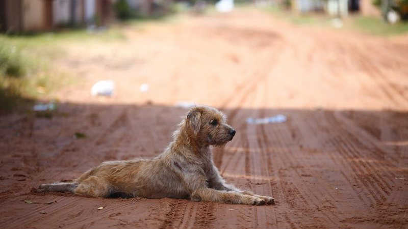 Projeto de lei prevê ambulância para resgatar animais 'de rua' feridos ou doentes em Campo Grande, MS