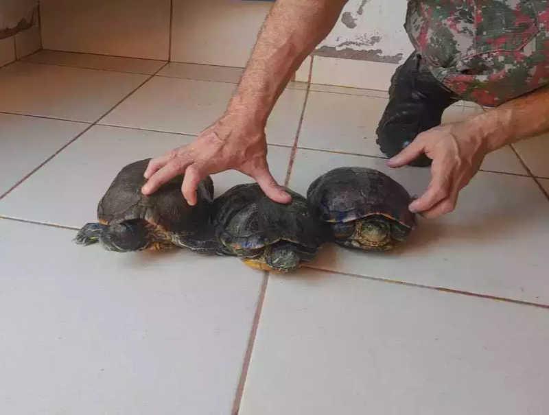 PMA volta e encontra mais animais exóticos em chácara com 'mini zoológico' em MS