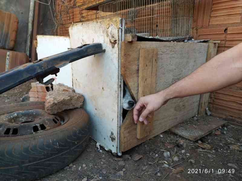 Mulher presa por trancar cachorro em 'caixa' por 2 meses é solta, mas fica proibida de ter qualquer animal