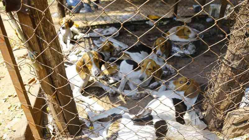 Ong que resgatou 40 cães de raça em fazenda na MS-040 ganha direito de doá-los