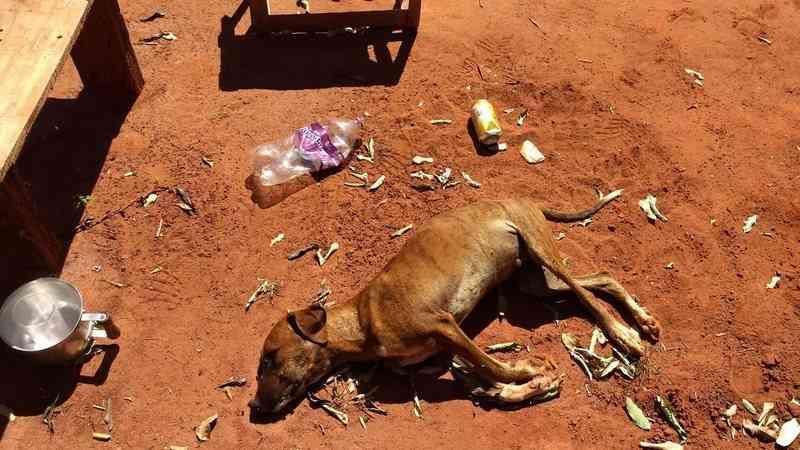 Baseado em modelo do Ceará, MS quer fazer perícias em animais vítimas de maus-tratos