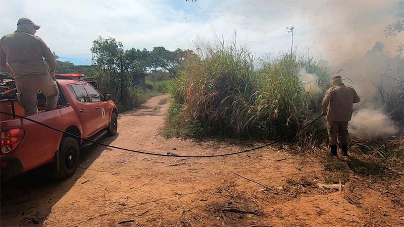 Bombeiros salvam cuíca e controlam queimada próximo a residências no Nortão, MT