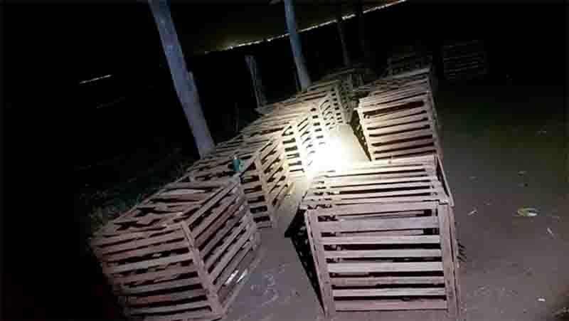 Também foram encontradas 30 gaiolas em um barracão. Foto: PMMT