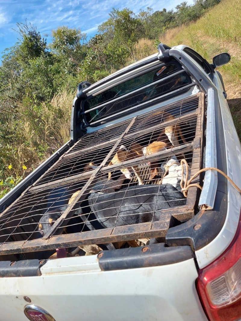 Junto ao animal, havia seis cachorros presos em uma gaiola. — Foto: PM/MT
