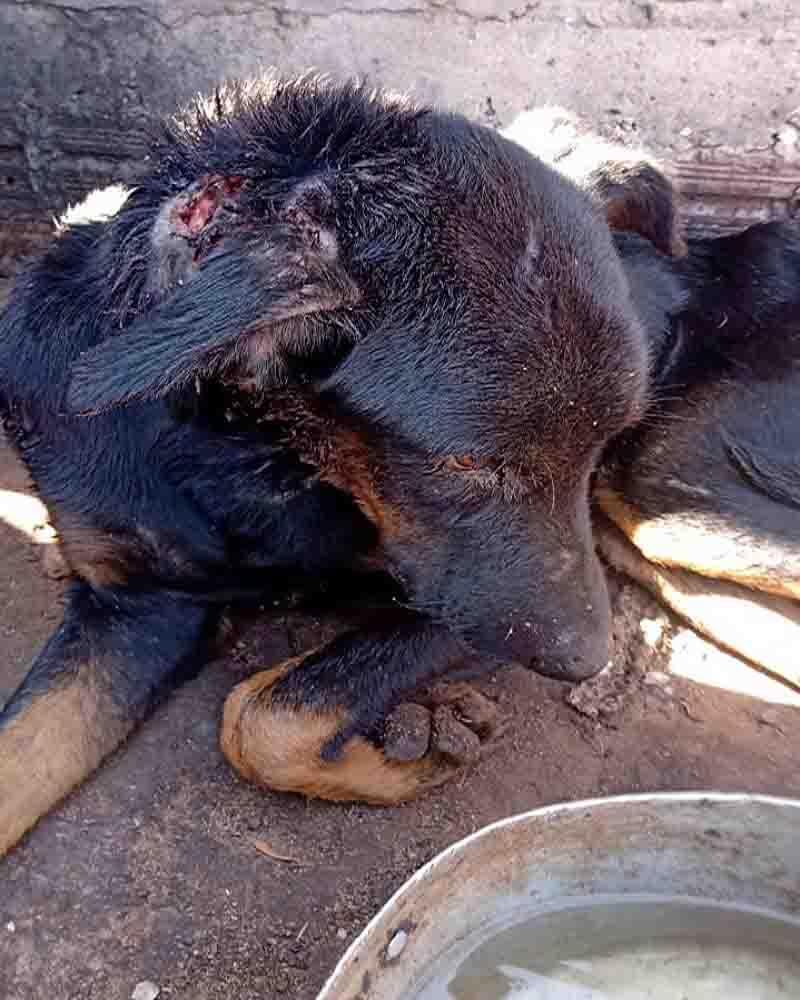 Polícia Civil resgata cachorro que sofria nas mãos de sitiante torturador em MT