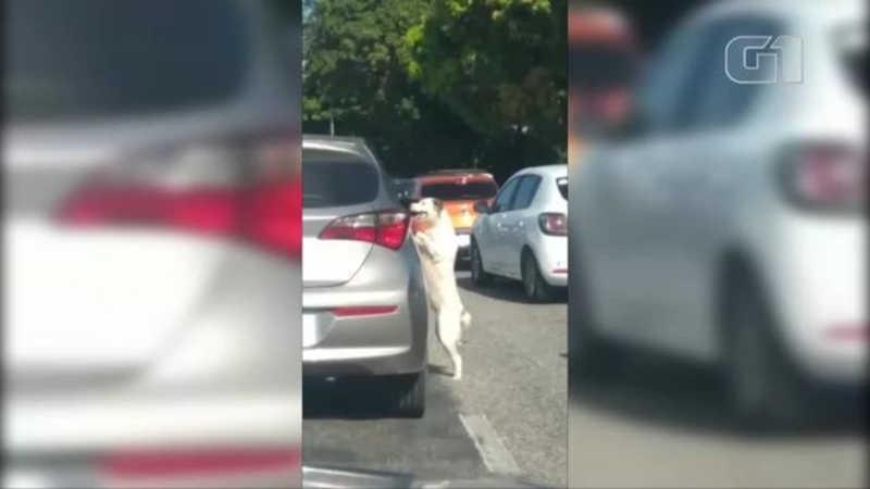 Cachorro é abandonado no meio de avenida em Belém e sai correndo atrás do carro; veja vídeo