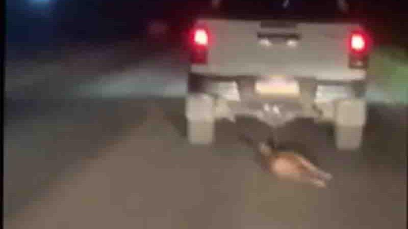 Imagem do momento em que o animal é arrastado pelo veículo. Foto: Reprodução/TV Liberal