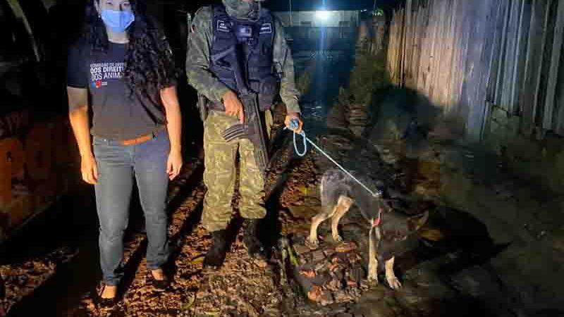 Após denúncia, cachorro vítima de maus-tratos foi resgatado por representante da OAB e equipe da Cipamb. Foto: OAB/Divulgação