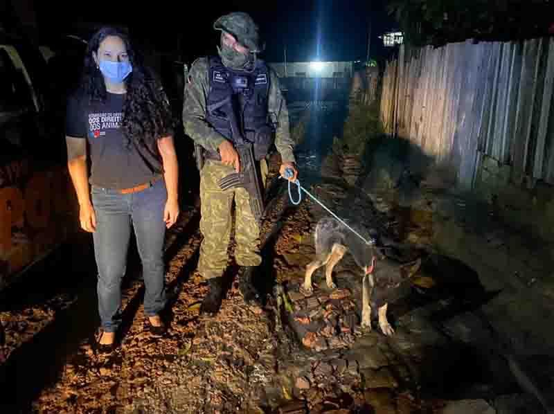 Cachorro maltratado pelo tutor após comer um papagaio é resgatado na comunidade Tabocal, em Santarém, PA