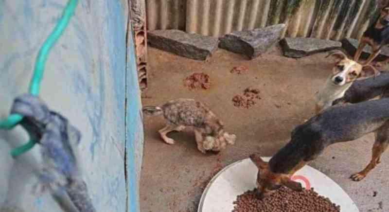 Vídeo mostra desespero de cachorros famintos presos em casa no Recife (PE) e cria rede de solidariedade; veja como ajudar