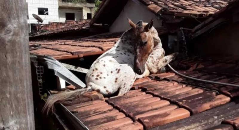 Problema histórico, cavalos soltos tomam conta do Grande Recife causando perigo para animais e motoristas