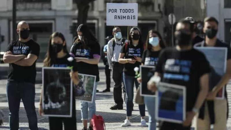 Cerca de cem pessoas em marcha para defender direitos dos animais em Portugal