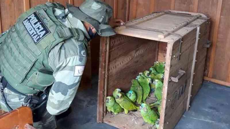 IAT encaminha para tratamento 58 aves nativas feridas após tempestade no PR