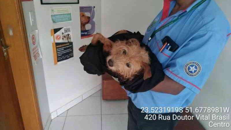 Mulher recebe multa após cachorra morrer por maus-tratos no PR
