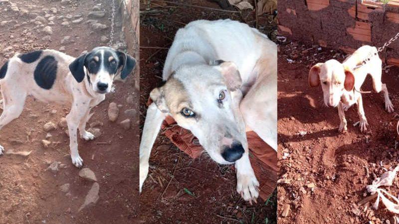 Cães foram resgatados em Candói — Foto: Divulgação/Polícia Militar