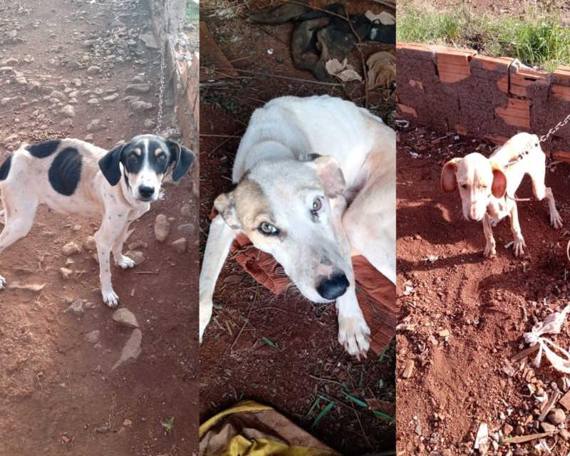 Cães são resgatados em situação de maus-tratos, e dois precisam de atendimento emergencial, em Candói, PR