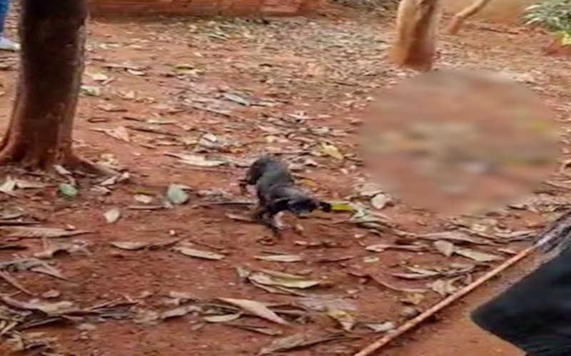 Cachorros são vítimas de maus-tratos e comem cadáver para se manterem vivos no PR